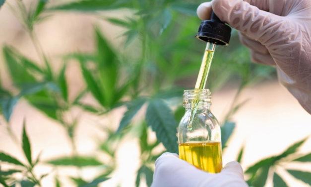 Cannabis medicinal: los principales puntos del decreto