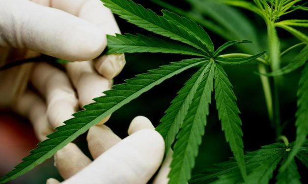 Pedido de informe sobre el accionar del gobierno sobre cannabis medicinal