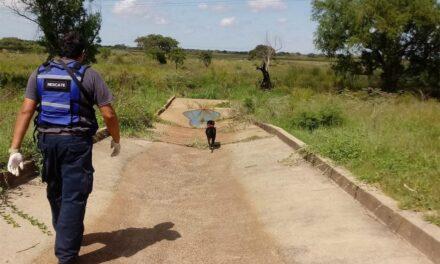 Alerta Guadalupe: Un perro en un día hizo más que la Justicia y el Gobierno en 2 meses